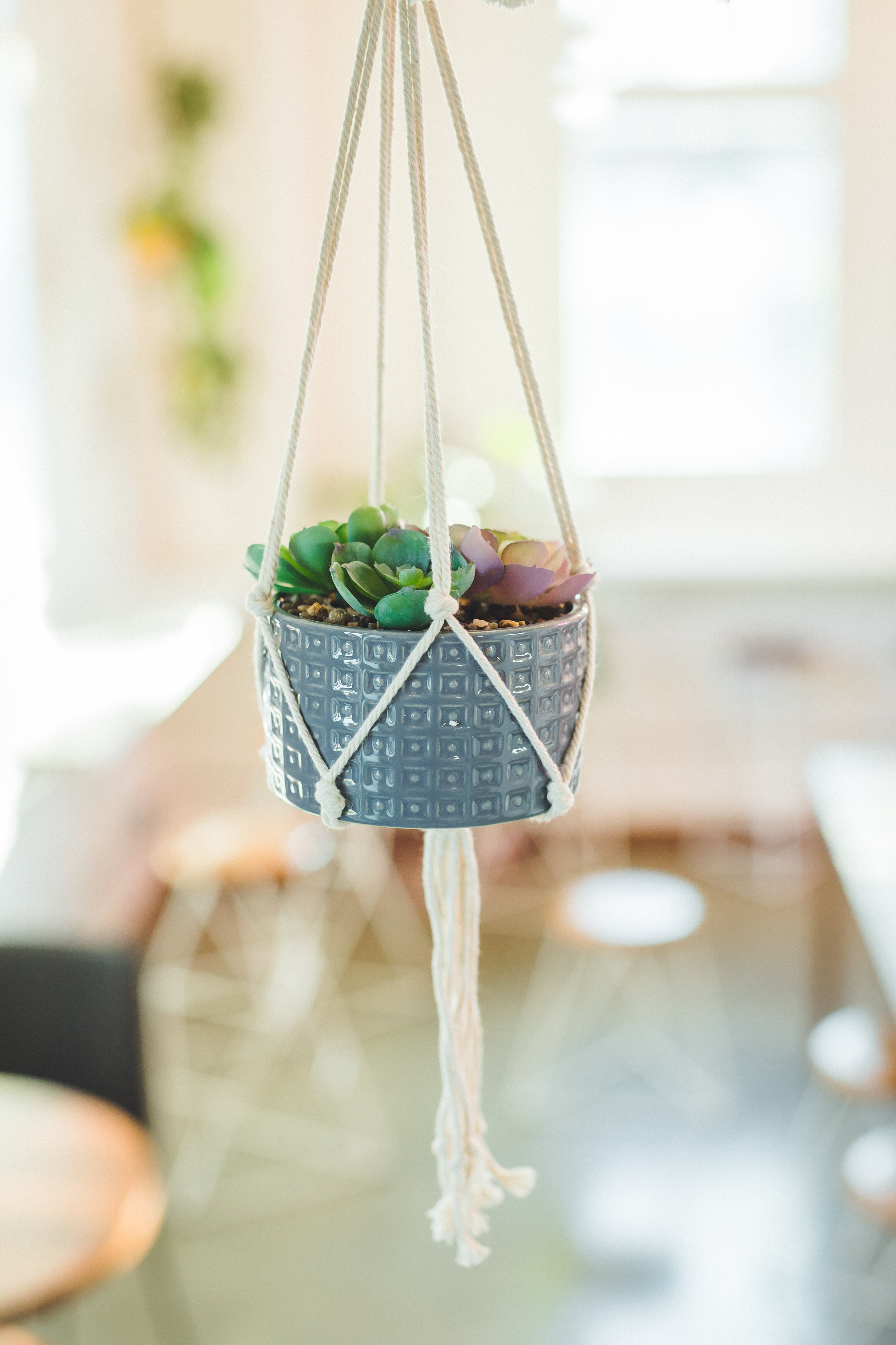 George Oliver Hanging Succulent In Planter Reviews Wayfair