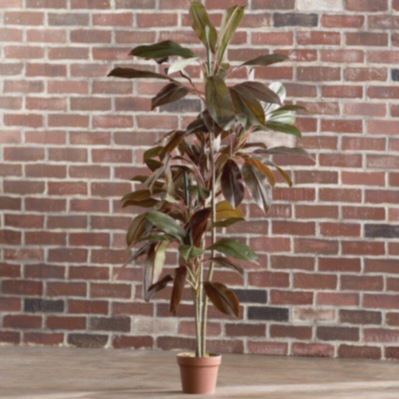 Cordyline Plante De Plancher De Soie En Pot