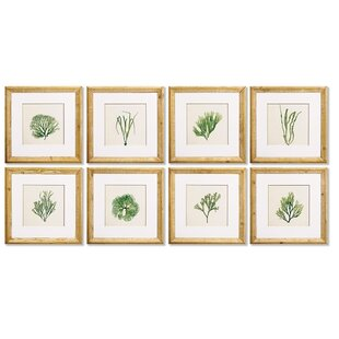 'Seaweed Study' 8 Piece Framed Print Set