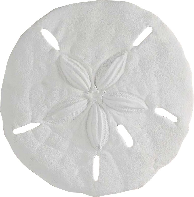 sand dollar wall décor reviews joss main
