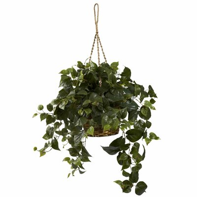 Alcott Hill Philo Hanging Plant in Basket