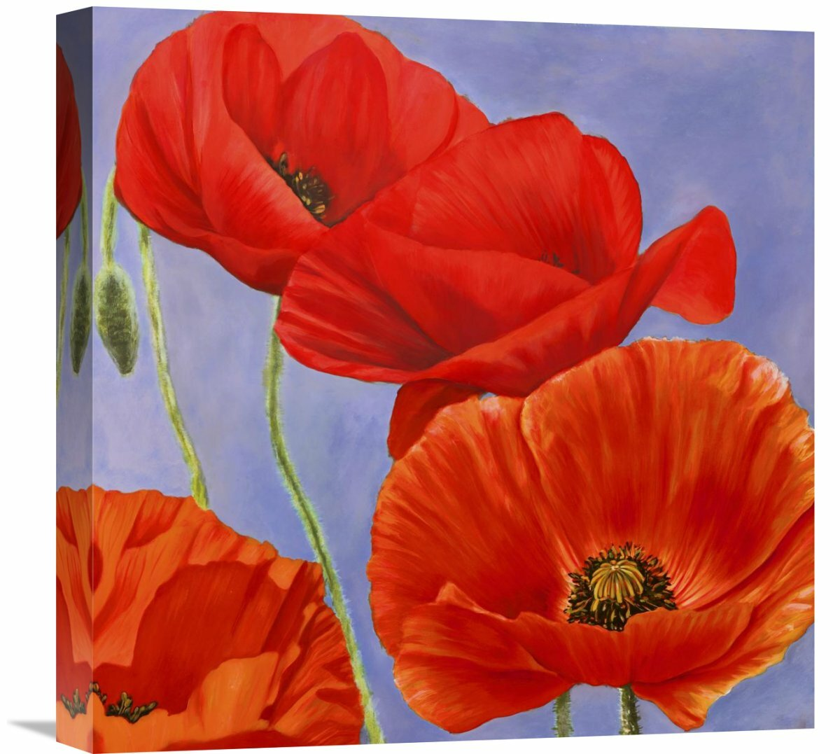 Global Gallery Dance Of Poppies I By Luca Villa Painting Print On Wrapped Canvas Wayfair