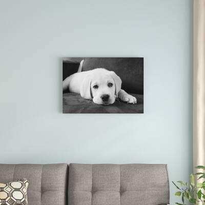 Kim Levin Bentley Animal Dog Pug Photograph Black and White Print Poster 11×14