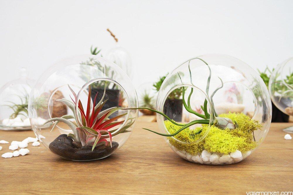 0 5 Inches Terrarium Planter Pots You Ll Love In 2021 Wayfair