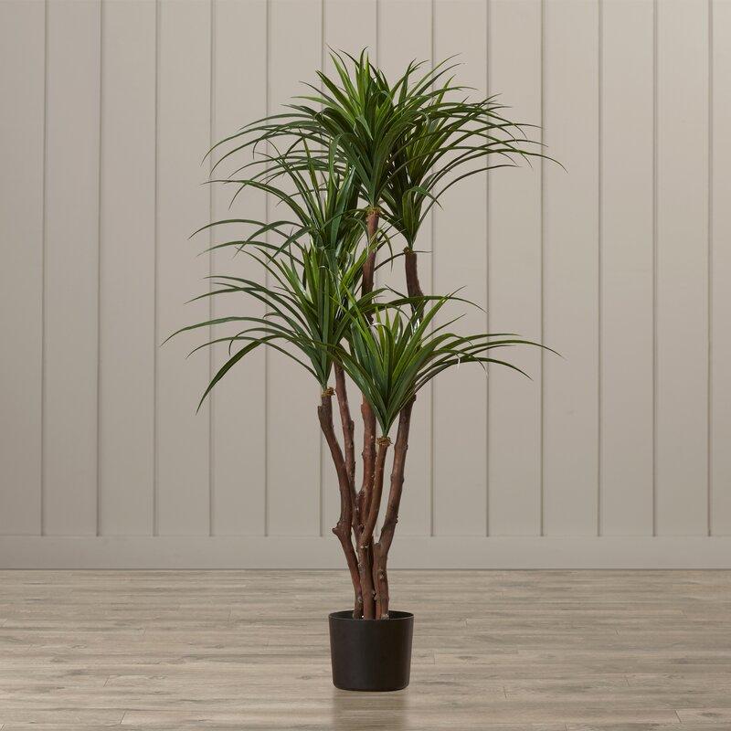 Tropical Yucca Tree In Pot Amp Reviews Joss Amp Main