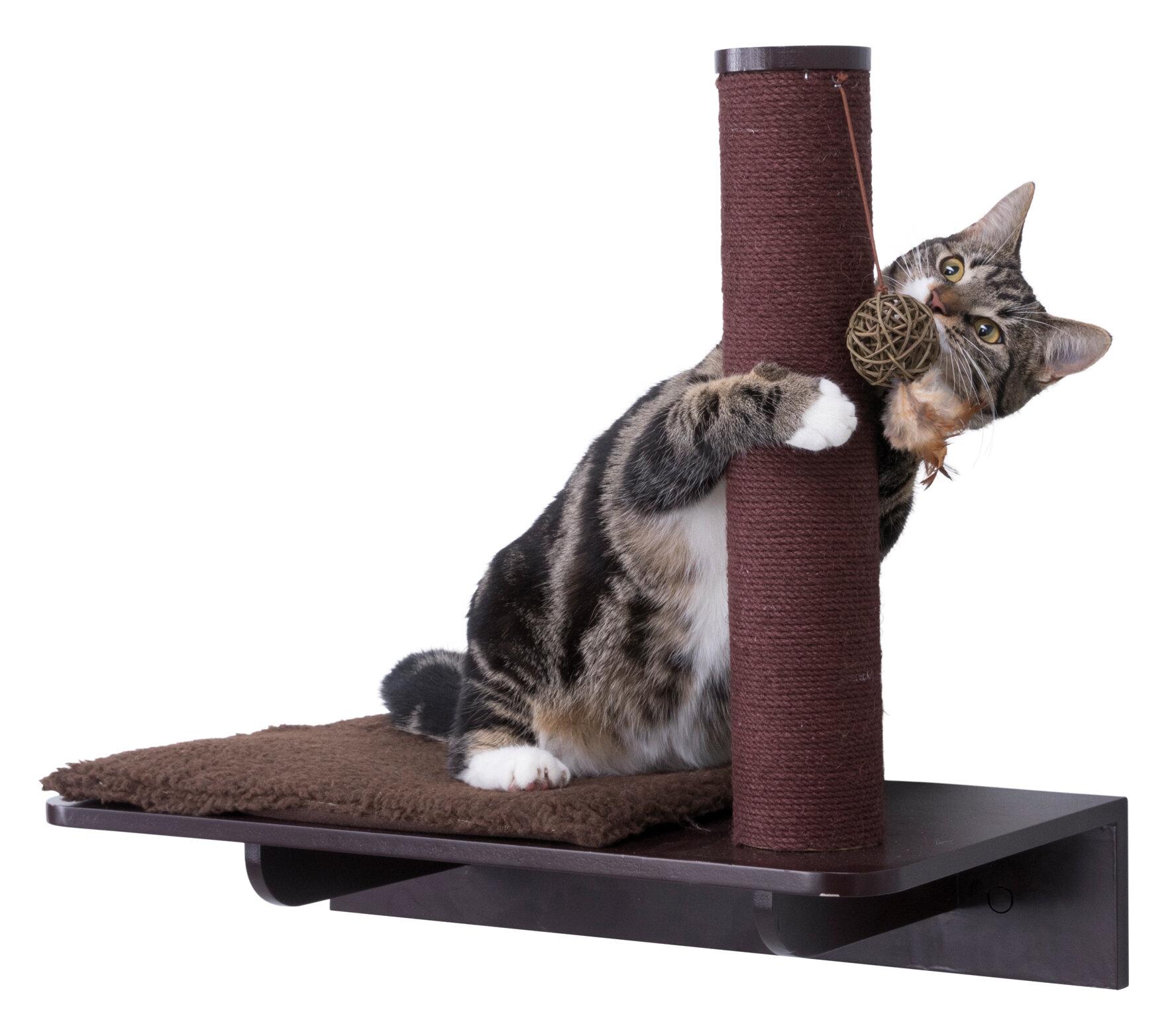 Cat Feeding Shelf | Wayfair