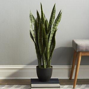 Foliage Indoor Plants You\'ll Love | Wayfair
