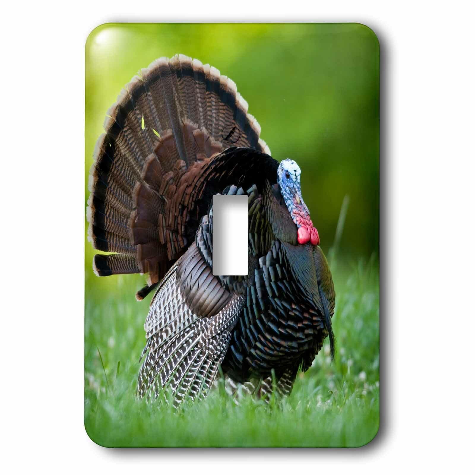 3drose Wild Turkey Gobbler 1 Gang Toggle Light Switch Wall Plate Wayfair