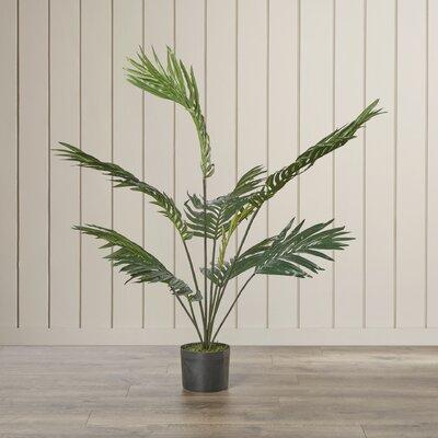 Kentia Palm Tree in Pot Beachcrest Home Size: 48 H