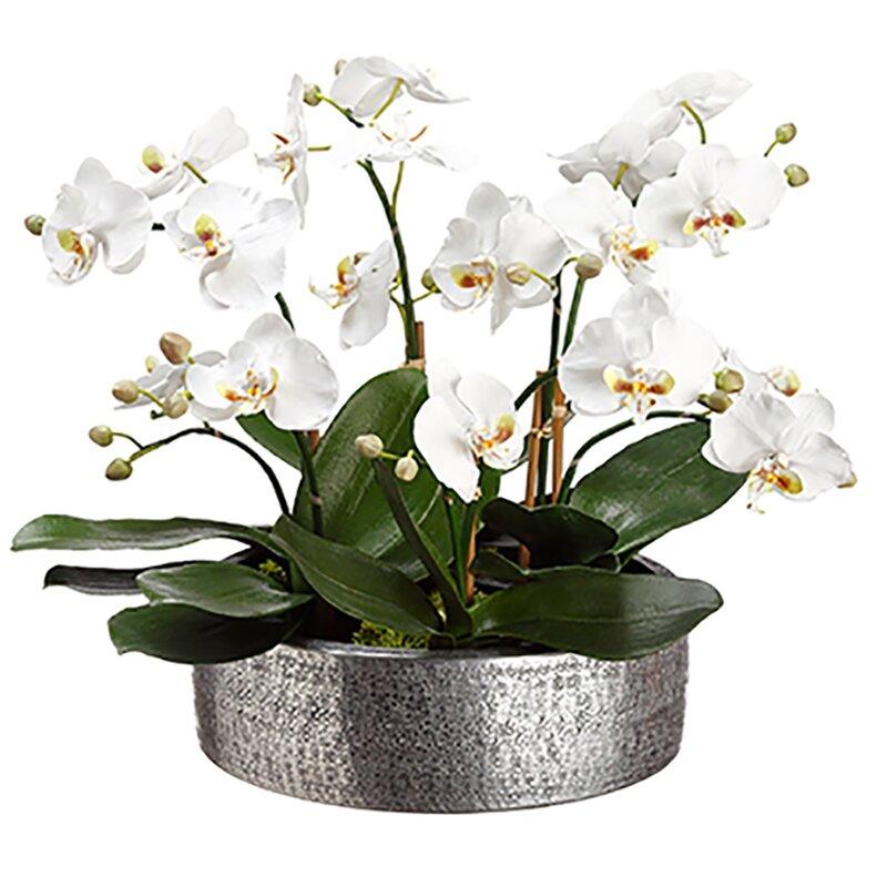 Silksareforever 16 Hx19 W Phalaenopsis Orchid Silk Flower Arrangement White Wayfair
