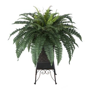 artificial ferns | wayfair.ca