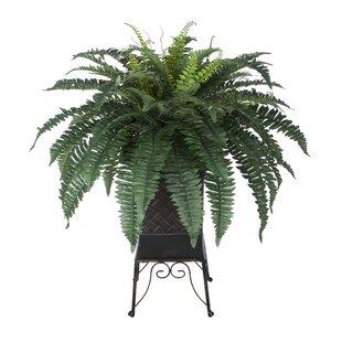 artificial ferns | wayfair.ca