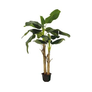 Esprit Vegetal Vertical Banana Tree In Planter By Bay Isle Home