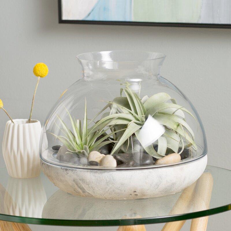 Syndicate Sales Glass Terrarium Reviews Wayfair