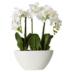 Faux Phalaenopsis Orchid in White Pot