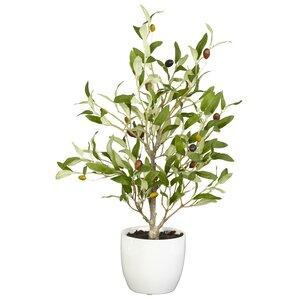 Small Faux Olive Tree in White Planter (Set of 2)