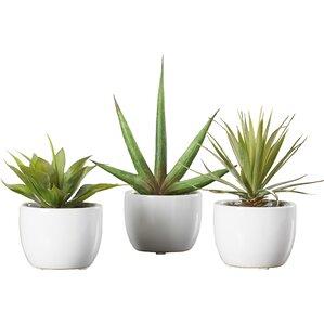 3-Piece Faux Southwest Succulent Set