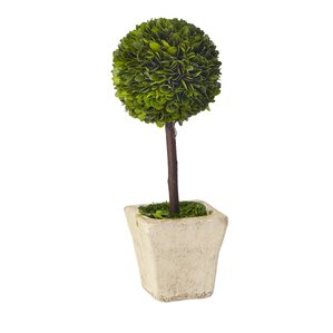 Boxwood Round Tapered Topiary in Clay Pot