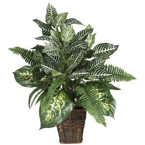 Faux Zebra Plant