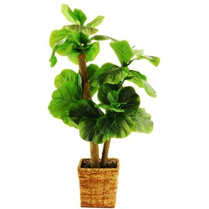 Faux Fig Tree in Woven Basket