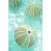 Alan Blaustein Sea Glass with Sea Urchins 1 Photographic Print