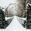 Magnolia Box Hornbeam Avenue In Snow, Edging East Parterre Ham House, Richmond, London by Clive Nichols Photographic Print on Canvas