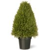 House Additions Upright Juniper Tree