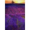 Marmont Hill 'High Summer Lavenders' by Chris Vest Painting Print on Wrapped Canvas