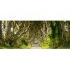 Pro-Art Glasbild Sparkling Forest, Kunstdruck