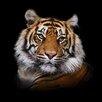 Pro-Art Tiger I Painting Print Glass Art