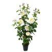 Ascalon Damask Rose Pot