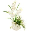 LCG Florals Phalaenopsis Orchids with Maiden Grass in a Distressed Shell Planter