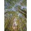 Komar Canopy 2.54m x 184cm Wallpaper Roll