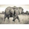 Komar Elephant 2.48m x 368cm Wallpaper Roll