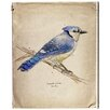 Oliver Gal 'Blue Jay' Graphic Art Wrapped on Canvas