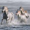 DEInternationalGraphics Horses Running at the Beach by Jorge Llovet Photographic Print Plaque