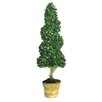 Ascalon Twisted Bay Tree Round Tapered Topiary in Pot