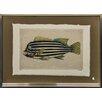 Castleton Home 1850 Fish X Framed Art Print