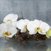 Pro-Art White Orchid II Photographic Print on Canvas