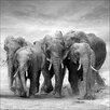 Pro-Art Elephant Family Photographic Print on Canvas