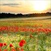 Pro-Art Glasbild Poppyfield, Fotodruck