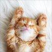 Pro-Art Glasbild Big Cat, Fotodruck