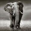 Pro-Art Grey Elephant Photographic Print on Canvas