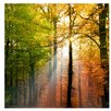 PPS. Imaging GmbH Morning Light 192cm L x 192cm W Roll Wallpaper