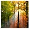PPS. Imaging GmbH Morning Light 288cm L x 288cm W Roll Wallpaper