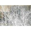 Parvez Taj 'Frosty White Branches' Graphic Art on Wrapped Canvas