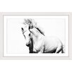 Marmont Hill Glorious Stallion Framed Photographic Print
