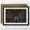 Big Box Art 'Peacock' Framed Photographic Print