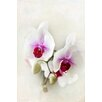 """Marmont Hill """"Orchids"""" by Sylvia Cook Photographic Print on Wrapped Canvas"""