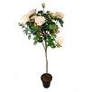 Ascalon Standard Rose in Pot